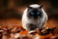 little Nea by awphototales #animals #pets #fadighanemmd