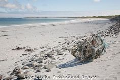 Whitemill Bay Beach, Isle of Sanday, Orkney Islands, Scotland from www.kevingeorge.photoshelter.com