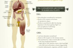 What Cannabis Does To Your Mind