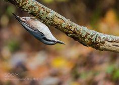 bird by Halina. Please Like http://fb.me/go4photos and Follow @go4fotos Thank You. :-)