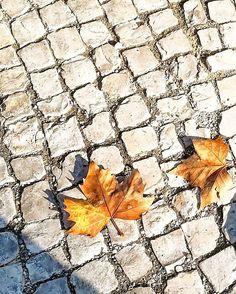 Autumn is on   #manhãsperfeitasblog   #outono #autumn #folhas #tonsdeoutono  #leaves #castanho #browncolors #november #18nov2017 #instagramar #instapics #minimal #minimalist #huawei
