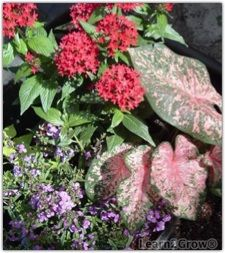 Heat loving foliage