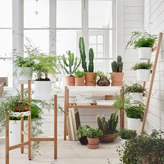 Style up an indoor garden with the new 'Satsumas' range by Ikea. The range of plant pots, stands and storage racks is designed for city dwellers