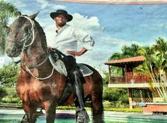 Faustino Asprilla's £43,500 horse has been found - four months after a drunk friend lost it http://ind.pn/1KOLTnZ