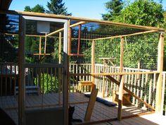 Our Outdoor Cat Enclosure A Room To Roam The Catararium