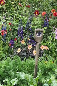 Plant lots of different flowers and colours for a cottage garden feel Back Gardens, Small Gardens, Mulberry Bush, Orange Cushions, Easy Care Plants, Cottage Garden Plants, Different Flowers, Growing Vegetables, Fruit Trees