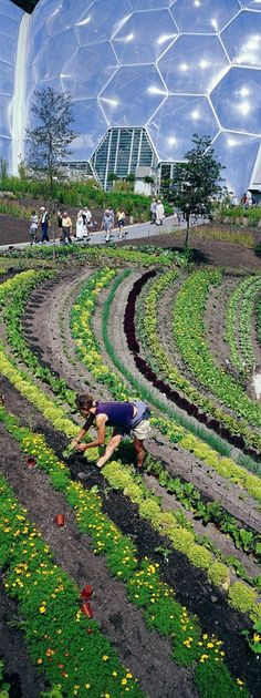 28 best Permacultura images on Pinterest | Permaculture, Vegetable ...