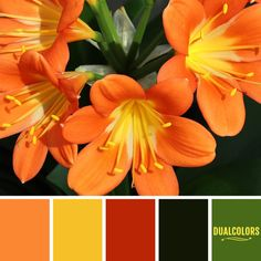 Color En Paleta 199... #colors #paletadecolores #paleta Colour Pallette, Color Combinations, Color Schemes, Mood Board Interior, Colour Board, Color Theory, Colorful Decor, Photoshop, House Colors