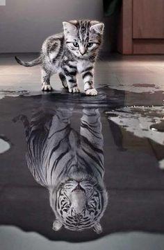 Todos os dias faça algo que tenha medo, e não dê atenção a ele, ignore.