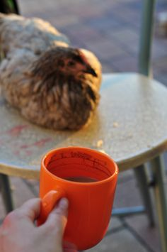 #pazurempojajkach #chicken
