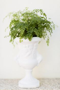 #fern, #potted-plants, #centerpiece, #vase, #floral-arrangement, #green, #plants  Photography: André Teixeira from Brancoprata - brancoprata.com  View entire slideshow: 10 Plants You Can\'t Kill on http://www.stylemepretty.com/collection/1296/