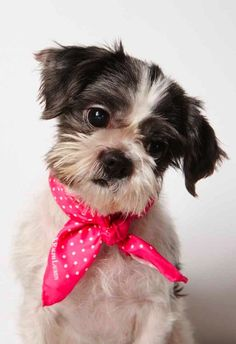 Dogs and Cats up for adoption - Humane Society of New York