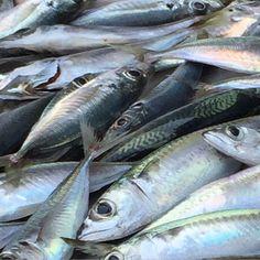 SARDE... Pesce azzurro