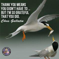 #Gratitude #Thankful http://www.sohp.com