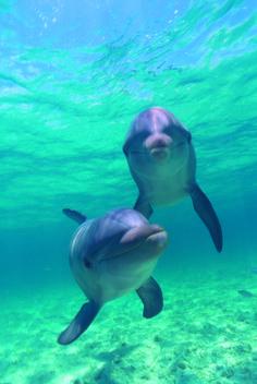 Una pareja de delfines curiosos