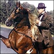 Tennessee Walker in action