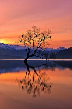 Lone Tree is not Lonely by Mei Xu