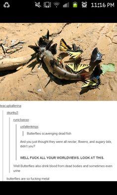 What the h*ck butterflies