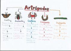 Mental: Reino Animalia: Artrópodes artropodes MaisMai Mai may refer to: Studyblr, School Lessons, School Hacks, Mental Map, Notebook Organization, Study Hard, Study Inspiration, Study Notes, Student Life