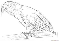 How to draw an african grey parrot step by step. Drawing tutorials for kids and beginners.