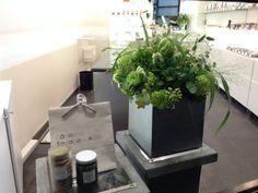 Shop decoration For Sadaharu AOKI, Boutique Vaugirard  35, rue de Vaugirard 75006 Paris