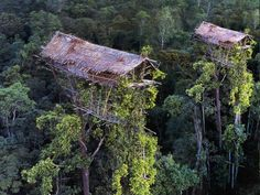 """theantidote: """" The Korowai people in Papua New Guinea build their houses up to 100 feet above the ground High above the forest floor, deep in the swampy lowland jungles of Papua, tree houses greet the eyes of explorers trekking into what remains one. Vanuatu, Tarzan Et Jane, Beautiful World, Beautiful Places, Papua Nova Guiné, West Papua, Cool Tree Houses, Crazy Houses, Forest Floor"""