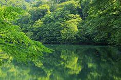 十二湖(鶏頭場の池)Jyuuniko