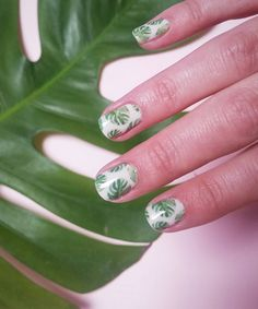 Monstera Deliciosa Nail Decals: Cheese Plant Tropical