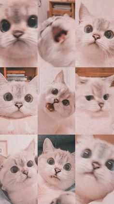 Kedi  🐱🐈 hayvan küçük hayvanlar
