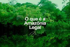 O que é a Amazônia Legal   ((o))eco