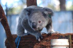 happy ending massage stories Port Macquarie
