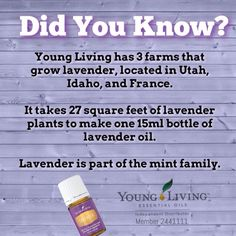 Knowing exactly where your EOs come from is key in knowing that they are pure and quality. Such a versatile essential oil! Young Living oils are never altered or diluted, making them the highest quality available on the market! Contact me for info - Independent Distributor 2441111