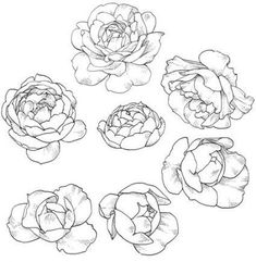 Pin by ruby c on sage in 2019 peony drawing, drawings, flowe Flower Drawing Tutorials, Flower Sketches, Art Tutorials, Peony Drawing, Floral Drawing, Drawing Flowers, Tattoo Flowers, Sketch Drawing, Peonies Tattoo