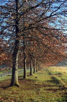 An Autumn driveway in the KZN Midlands. http://www.n3gateway.com/the-n3-gateway-route/midlands-meander-association.htm