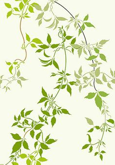 Large Trailing Clematis Leaves Stencil Clematis Vines