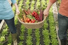 What Does the Future Hold for Our Global Food System? #news #alternativenews