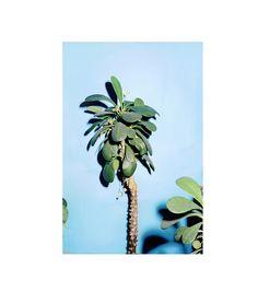 "This looks like a ""Jade Plant"". Sense Of Sight, All About Plants, Jade Plants, Different Plants, Tree Forest, Flowers Nature, Light Photography, Nature Photos, Shrubs"