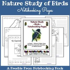 Freebie - Bird Notebooking Pages
