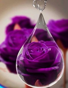 Purple rose.