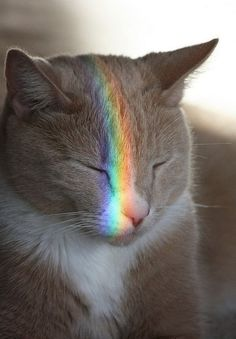 THE RAINBOW OD LIFE HAS TAKEN MORE KITTIES FOR ITS HAPPINESS CAUSE