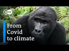 #Africa #Climate #Wildlife #SWD Thankyou (Under 29 Min Video) Hey Team I am watching this now *Live , Join Me 🎯⚖️♻️💚🌏🤔👍💲🦍⚕️ Can Africa's forests help save the world?   DW Documentary - YouTube Trust And Loyalty, Habitats, Youtube, Forests, Wildlife, World, Animals, Climate Change, Environment