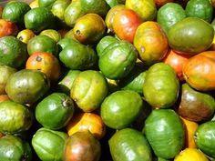 jocote fruit   - Costa Rica http://www.costaricarios.com/costa-rica-adventure-tours.html