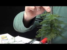 Building Trees Part 2 (spruce/conifer) - Modellbäume selber bauen. Here is another instruction how to build a model a model tree, hope i can give you some su...