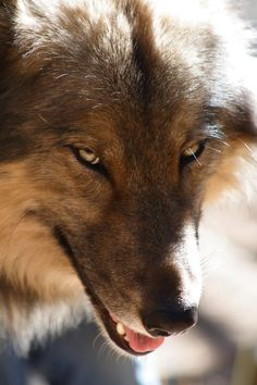 Commanding View by ~Timberwolf4u on deviantART