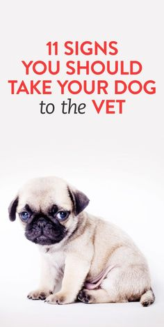 11 signs you should take your dog to the vet