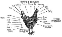 Permaculture Chickens as Co-Workers? - The Permaculture Zone Permaculture Design, Permaculture Garden, Fukuoka, One Straw Revolution, Bill Mollison, Poultry Business, Poultry House, Insect Pest, Raising Chickens