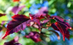 30 Colorful Autumn Wallpapers