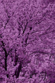 ✮ Lush Lavender