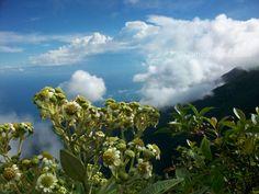 Pico Occidental. Parque Nacional El Ávila o Waraira Repano #travel #tourism #Venezuela