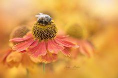Bee Happy / 500px